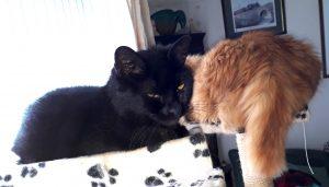 Harry & Milo